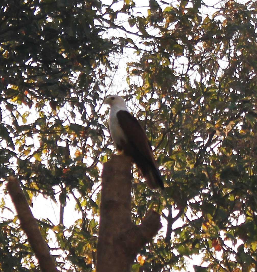 2 heldagar kvar i Goa